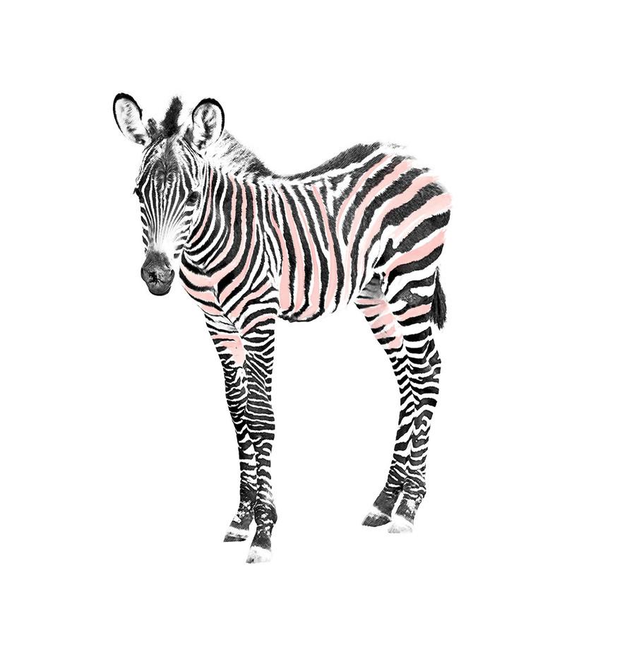 Artistic-Print-Zebra-Sketch-Watercolor.j