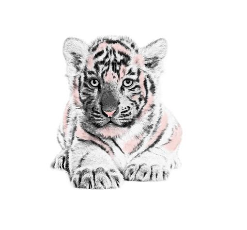 Artistic-Print-Tiger-Sketch-Watercolor.j