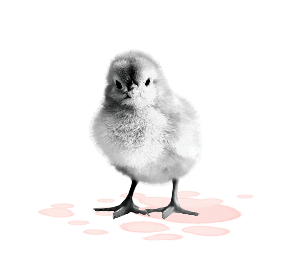 Artistic-Print-Chick-Sketch-Watercolor.j