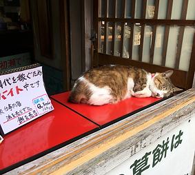 適材適所|猫のお仕事