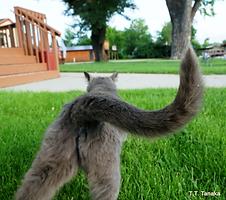 転職|猫|集中力