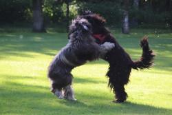 Tierfotografie - Hunde