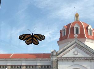 Mariposa iglesia cuetzalan.jpeg