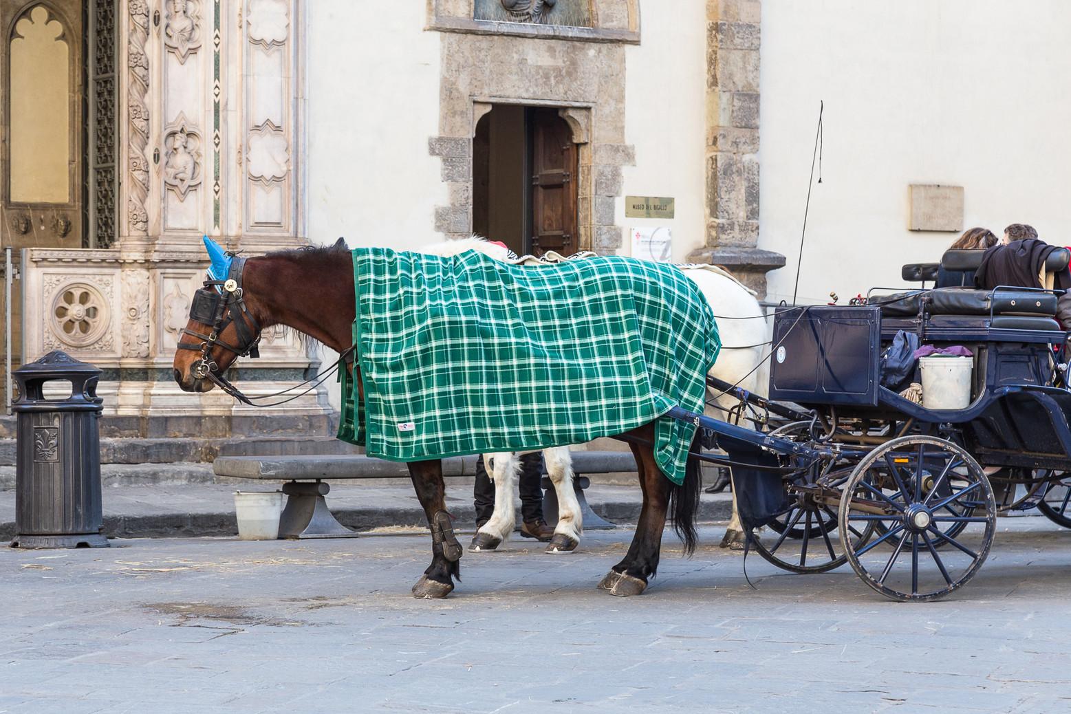 Tourist Horse / 2017