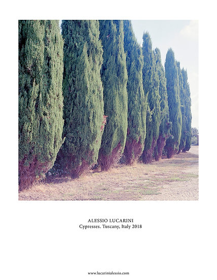 Cypresses. Tuscany, Italy 2018