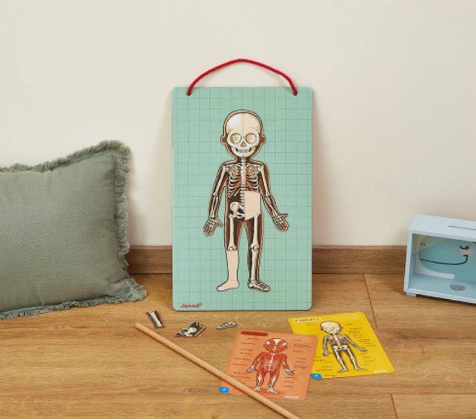 לוח מגנטי גוף האדם