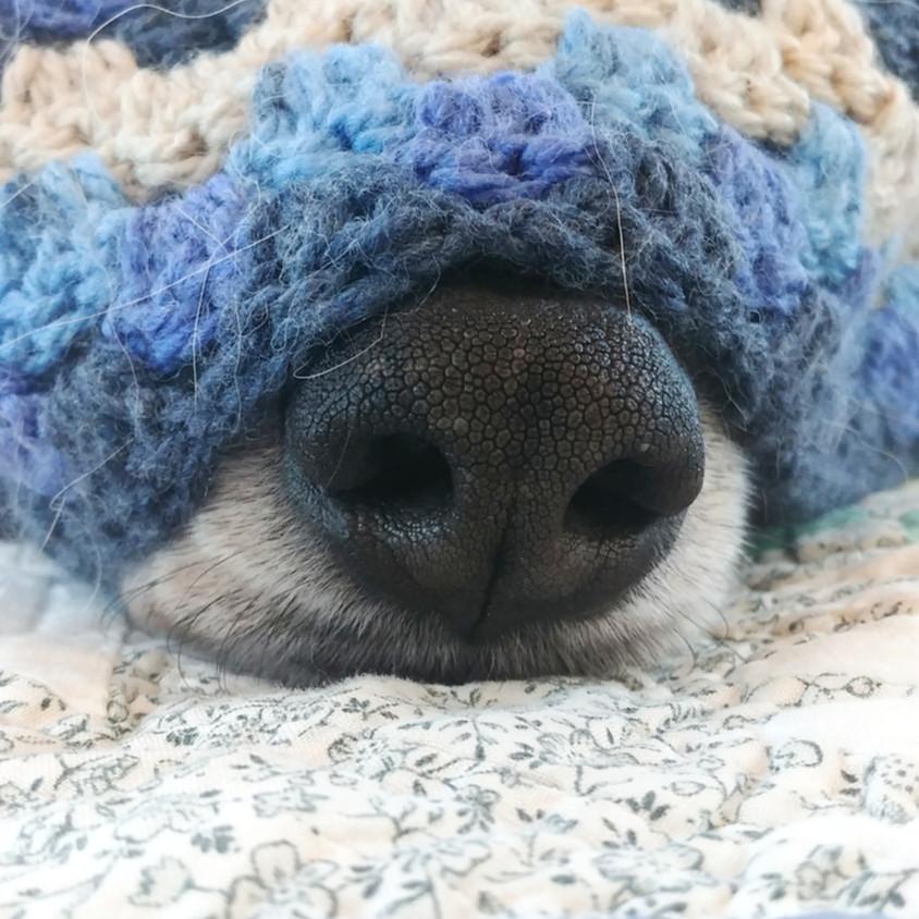 Intermediate Crocheting, 4 Session Course
