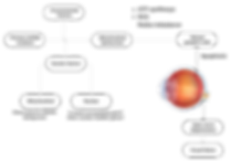 LHON_diagram_fnl.png