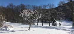 winter10_edited_edited