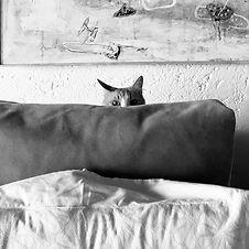 capuchino gato juan villoro