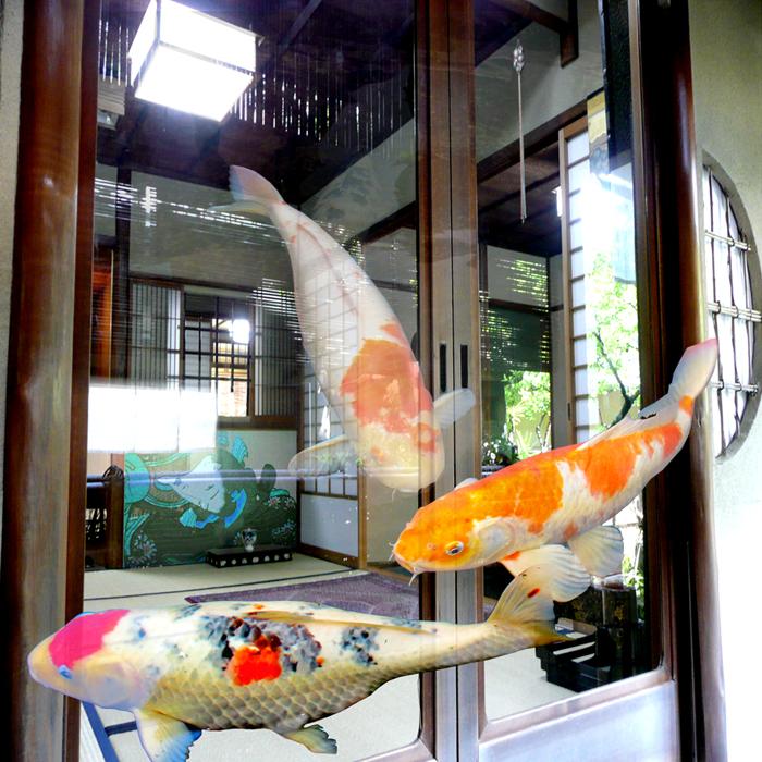 Koi fish in old Kyoto