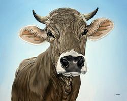 Swiss cow brown Swiss