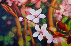 Prunus in bloei (verkocht)