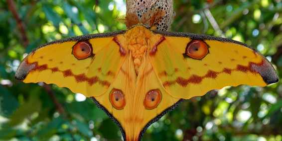 'Comet Moth' by Sam Young