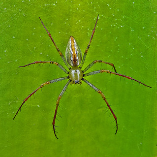 'Green Lynx Spider' by Sam Young - Highly Commended