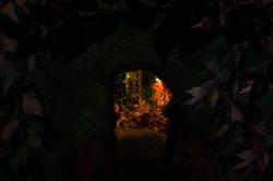 tunnelito