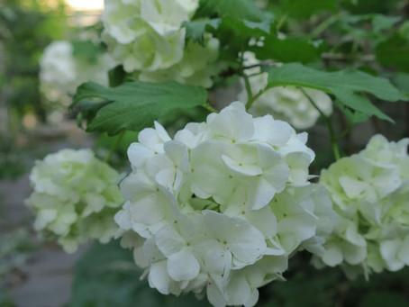 4月に咲く花(後半編)
