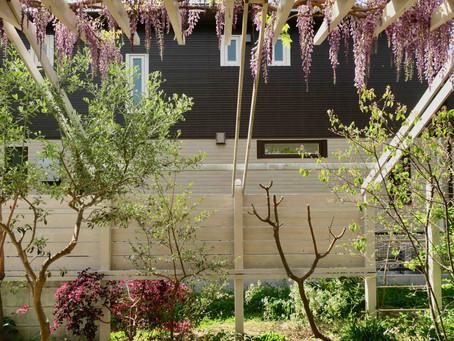 窓の向こうに見える初春の庭