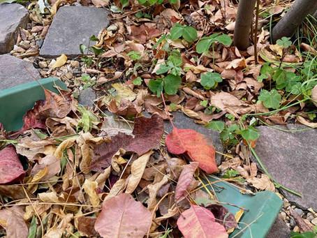 落葉はゴミじゃない