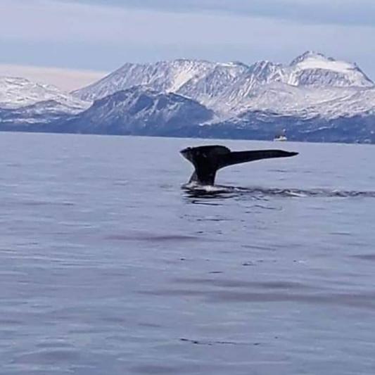 halloween whale.jpg