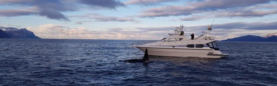 Båt_og_orca.jpg