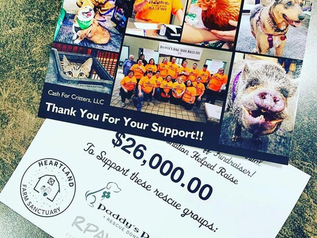Fundraising for local animal rescues!