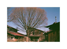 ギターの音が聴こえる この大きな木はどんな歴史を見てきたのかな 私はまたここにくるだろう きっと