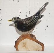 glass blackbird