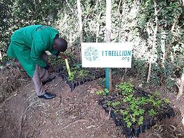 Measuring the Moringa trees
