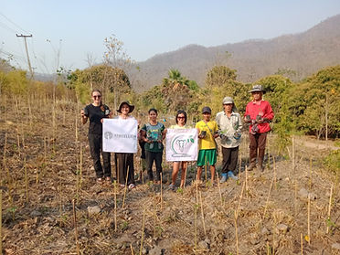 planting trees in Thailand