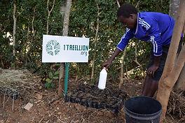 Moringa trees planted in Kenya