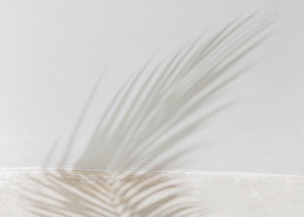 palm leaf shadow on wall