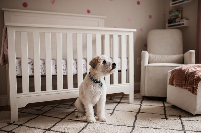 Dog guarding baby's crib