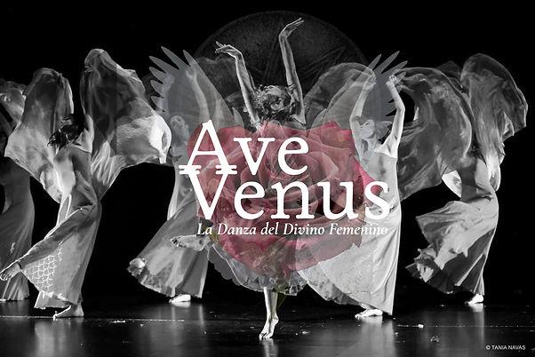 AveVenus_Dossier11.jpg
