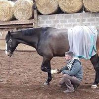 Comment évaluer l'état de bonne santé de votre cheval ?