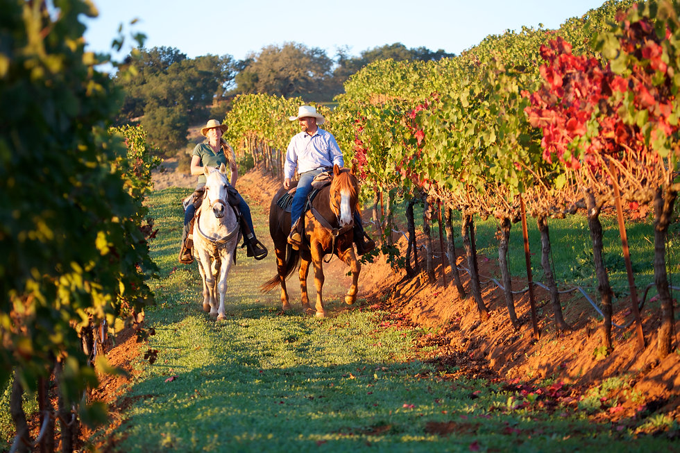 Horseback riding couple in a vineyard in