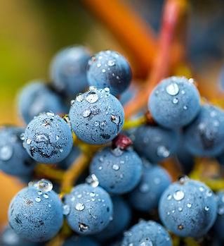 Titus-Vineyards-Morning-Cabernet-7892.jp