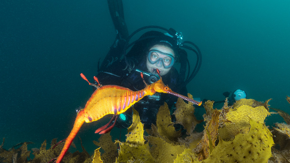 Charlie and a weedy seadragon