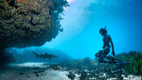Campaign to Protect Grey Nurse Sharks in Bondi