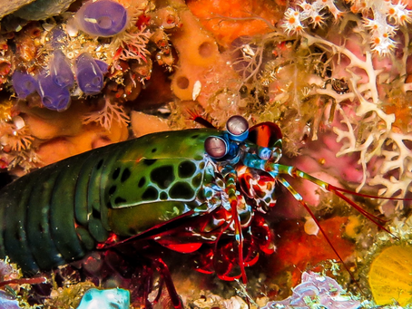Guide to Underwater Macro Photography
