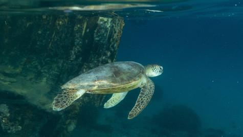 Turtle shipwreck