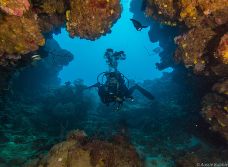 Wide-Angle Underwater Photography Tips