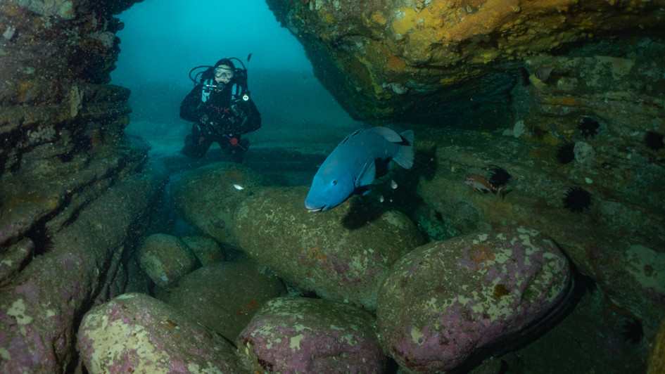Blue Groper in Bondi Caves