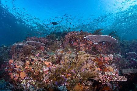 Komodo Reef Scene-06930.jpg