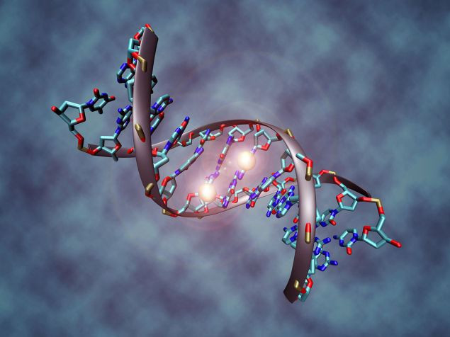 A DNA molecule fragment (Wikimedia Commons)