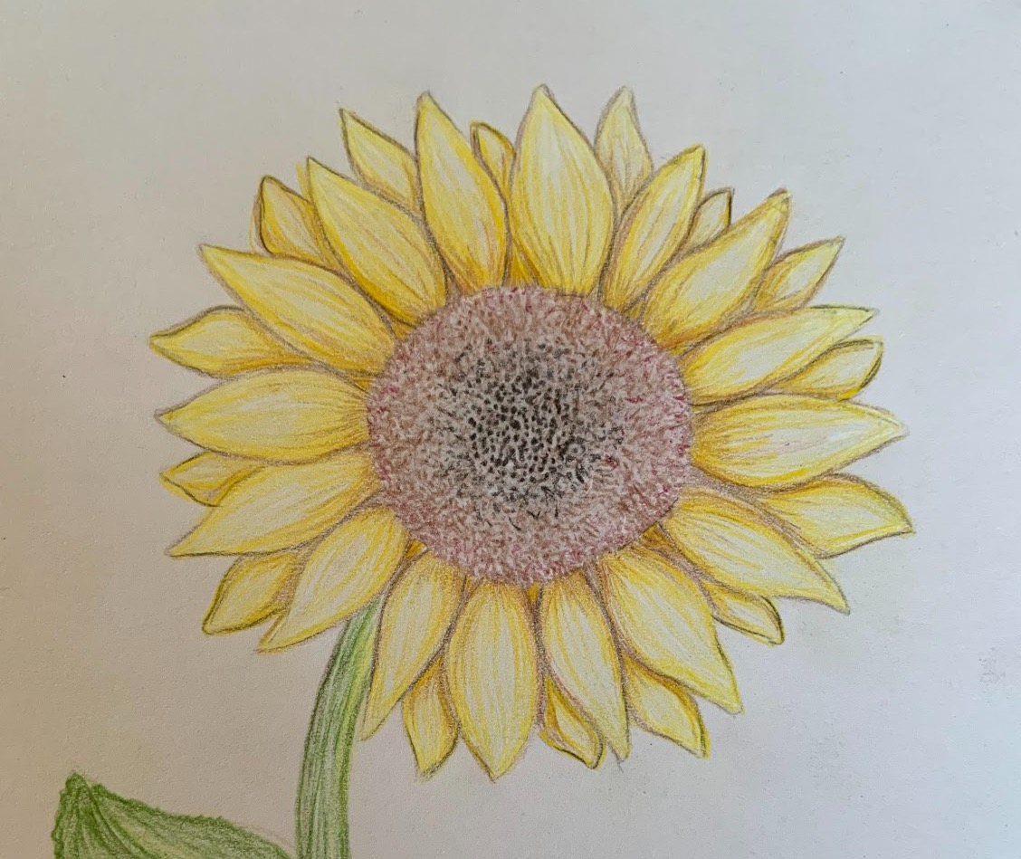 Click on the sunflower for our tuition rates