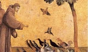 Saint François, modèle pour l'écologie intégrale - écho