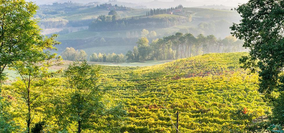 Vineyard View from Villas
