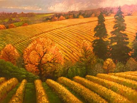 Northern Vineyard