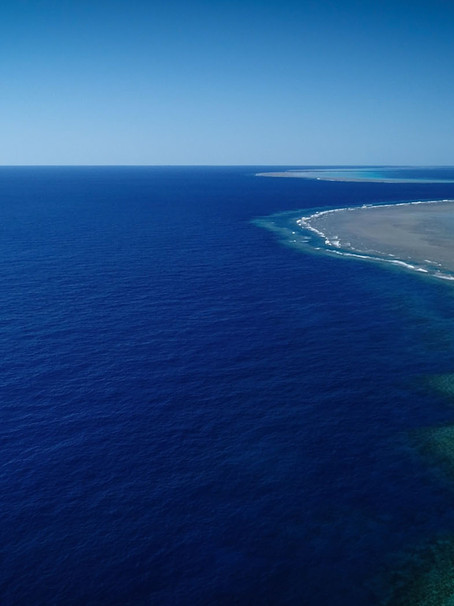 Ocean News | Scientists Discover A New Coral Reef Off The Australian Coast